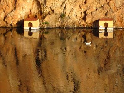 Ducks+2.jpg