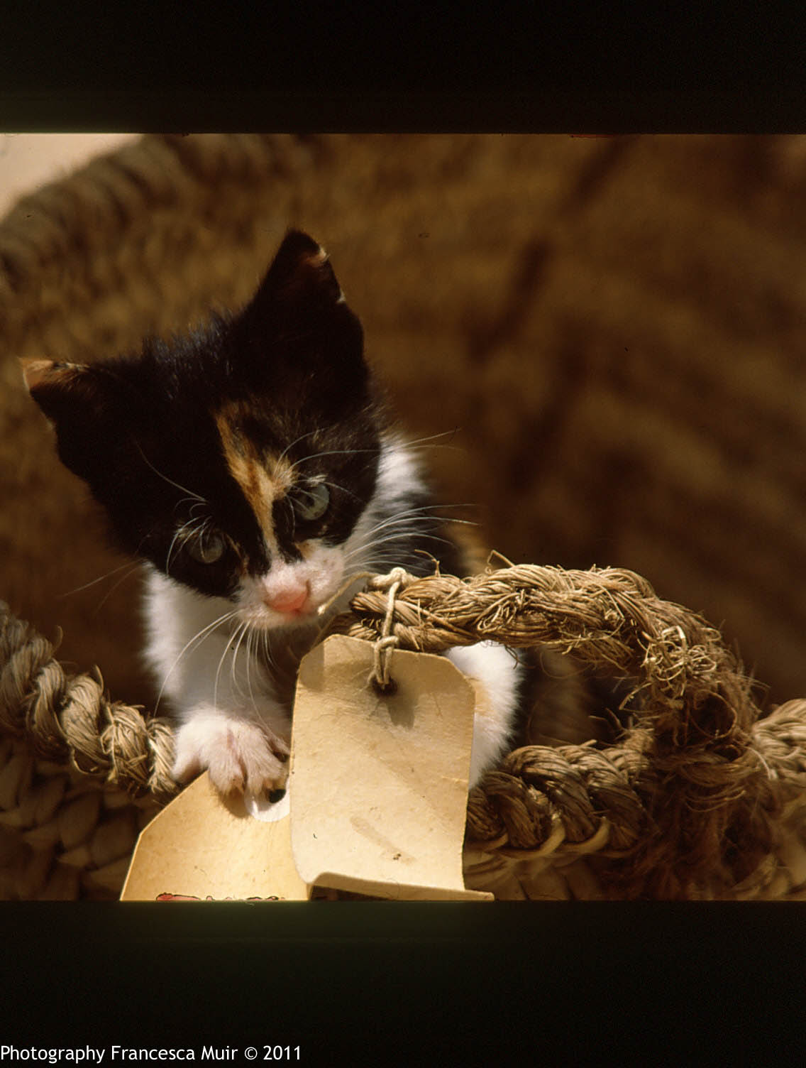 Cretan+Cats_0001.jpg