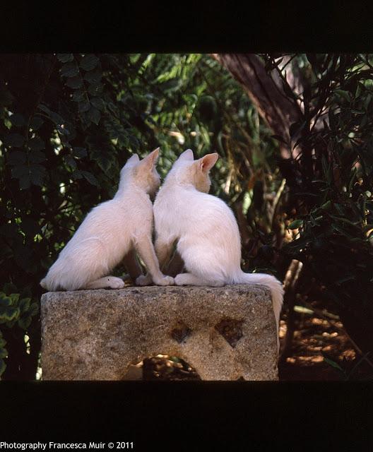 Cretan+Cats_0002.jpg
