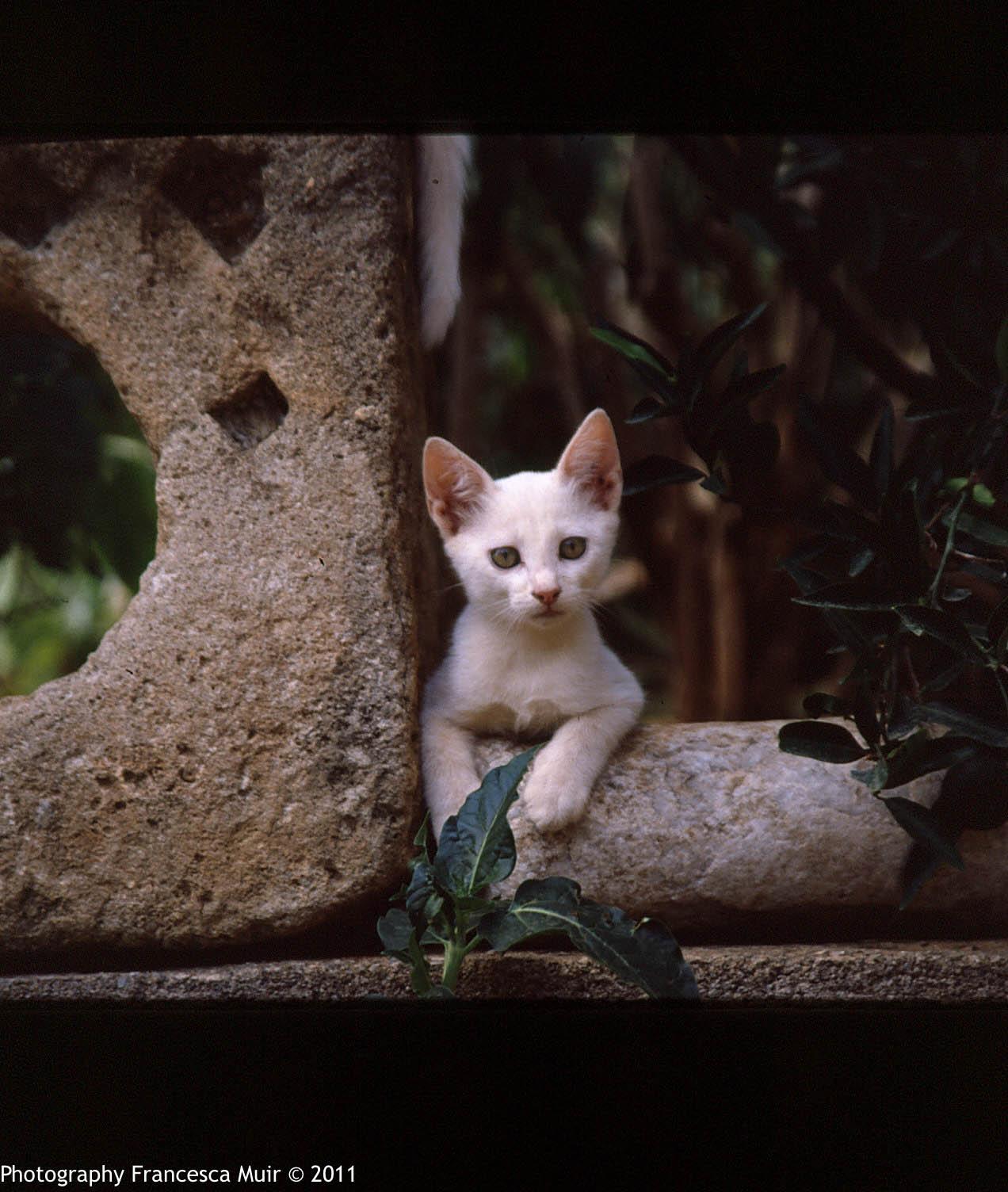 Cretan+Cats_0004.jpg
