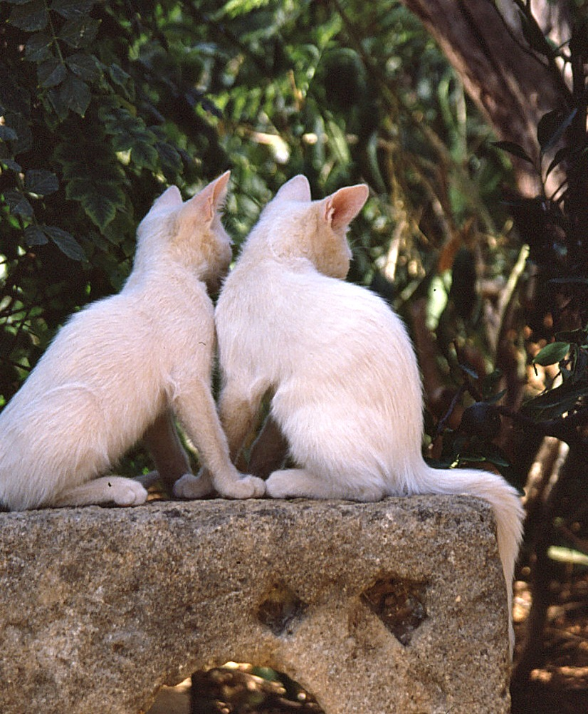 Cretan Cats_0002