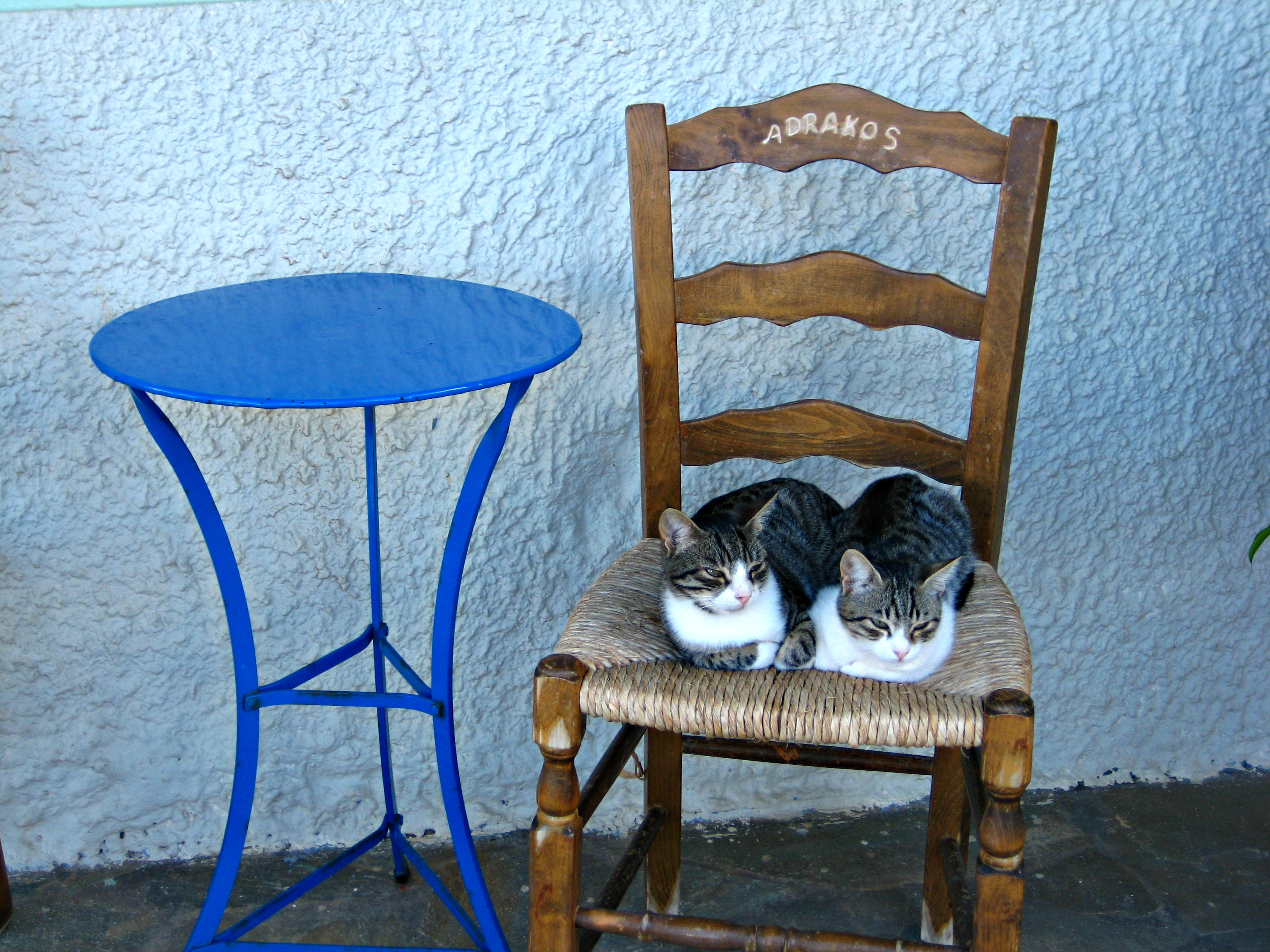 Adrakos cats